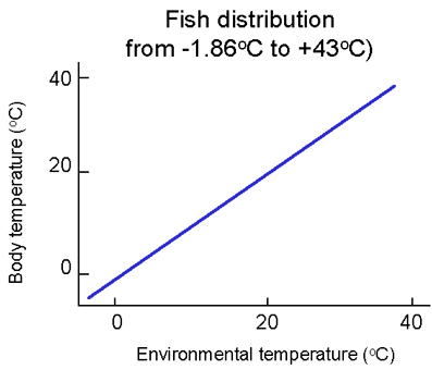 Environmental temperature and body temperature in fish for Temperature for fish